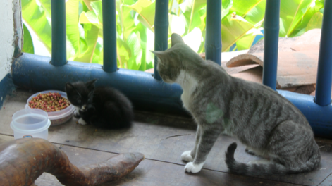 One of the kittens with its mother eating breakfast on my dorm room balcony.